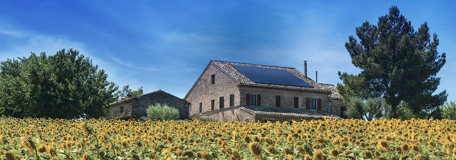 sustainability - home with solar panels in sunflower field